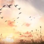 Center for Spiritual Awareness, Christian Spiritual Alliance