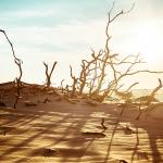 Subduing Global Warming