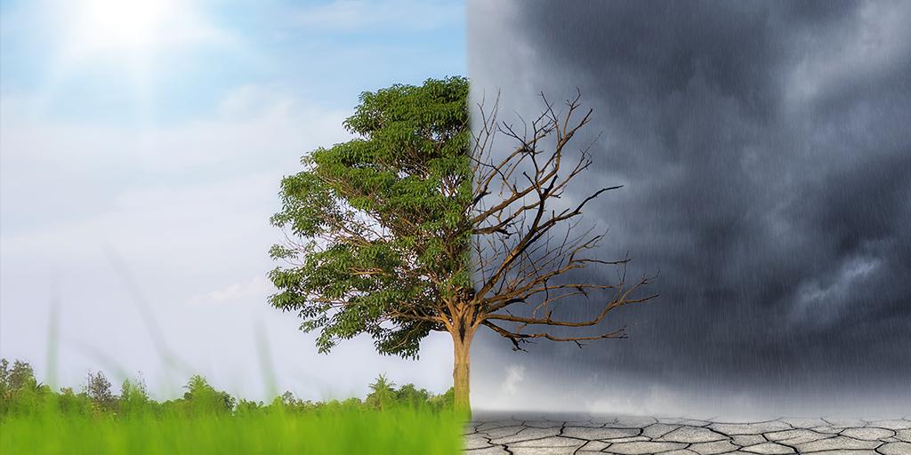 Paris Climate Globalism