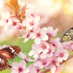 Repeating Natural Wonders