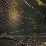 Wonders of Orb-Weavers