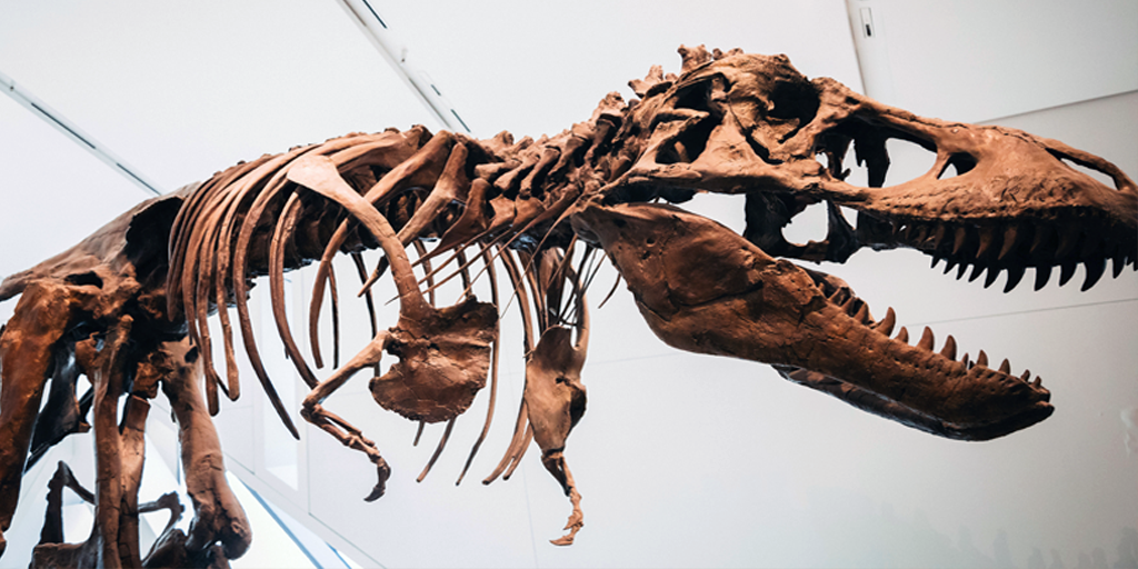 Dinosaur- 865