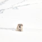 Winter's Statistical Wonders