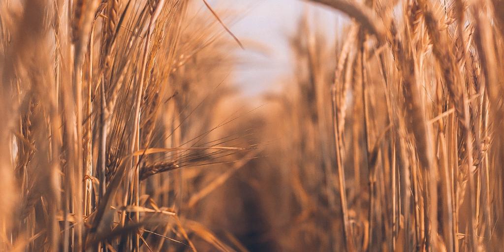 Ruth | Women in Jesus' Genealogy